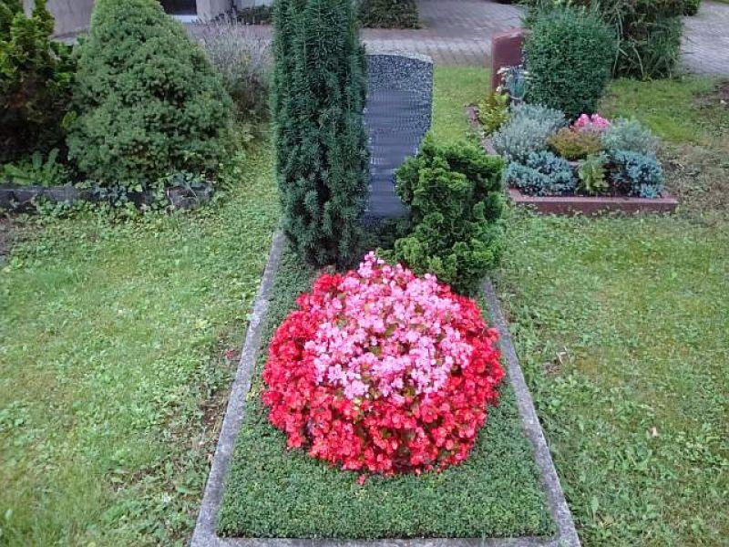was pflanzt man im august grabpflege wann pflanzt man thuja erdbeeren pflanzen auf stroh. Black Bedroom Furniture Sets. Home Design Ideas